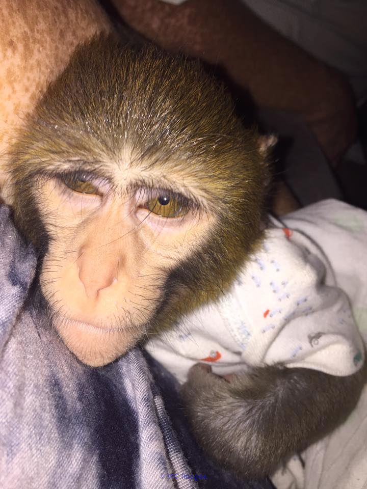 baby monkey very friendly for adoption toronto