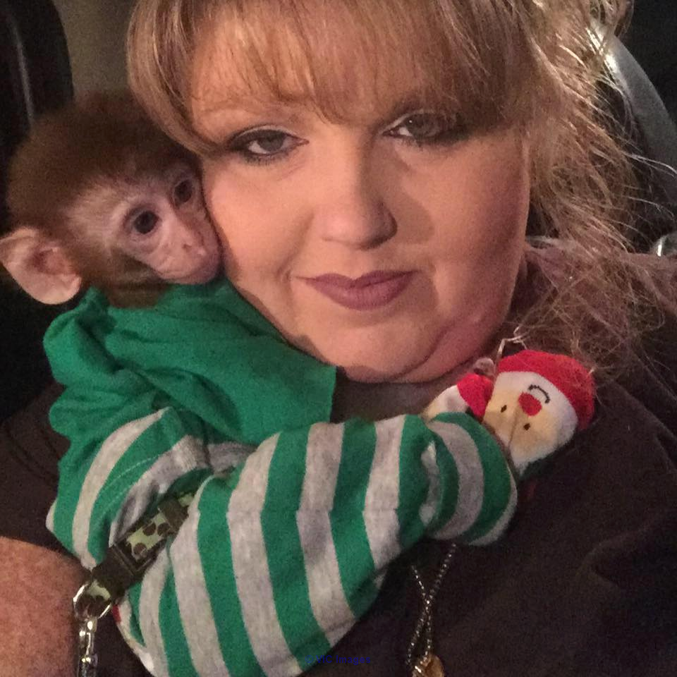 Super cute home trained baby monkey for adoption Toronto - GTA, Ontario Classifieds