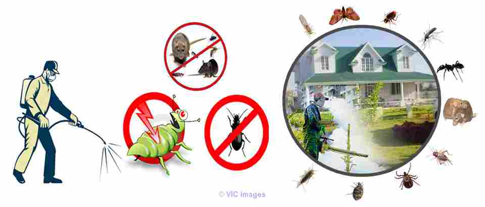 Get Relaible Pest Control Services In Mississauga At Affordable Prices toronto