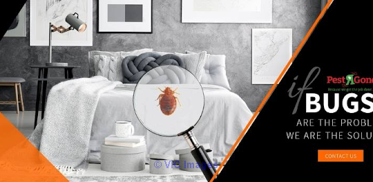 Bed Bugs Exterminator Toronto - Pest R Gone