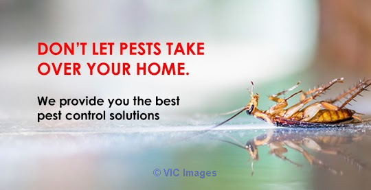 Pest Control Services in Toronto - Pest R Gone toronto